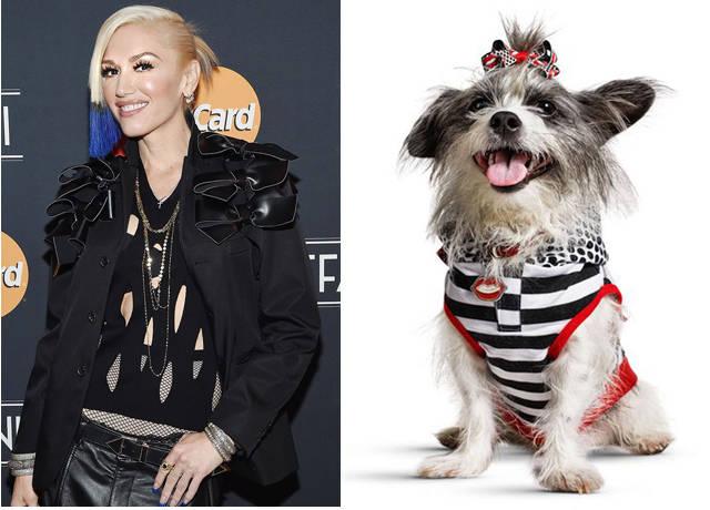 Gwen Stefani a lansat haine pentru animale de companie